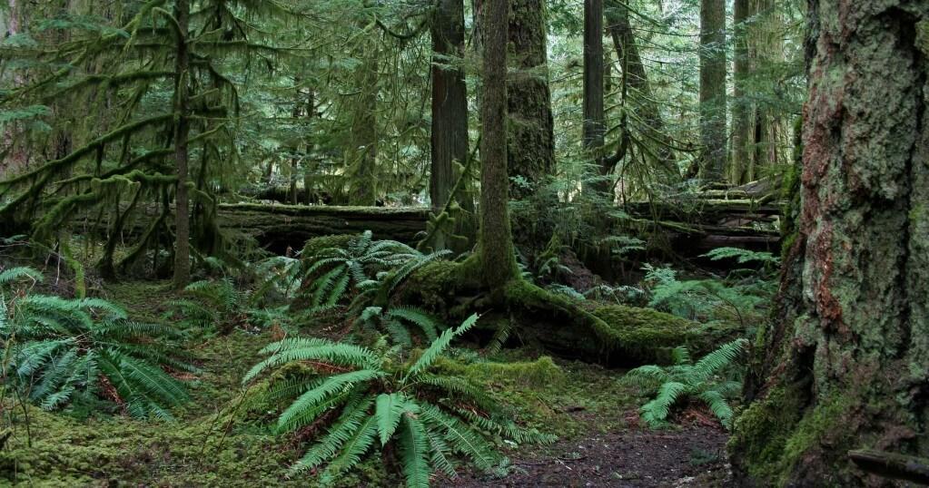 Sasquatch The History Of Canada S Bigfoot