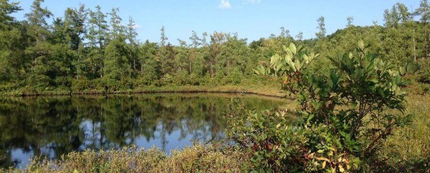 oak-island-swamp