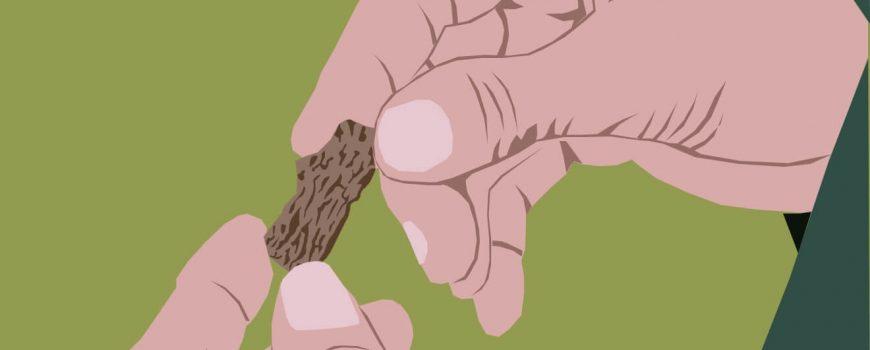 oak-island-bone-2