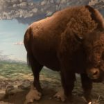 How Canada Saved the Buffalo