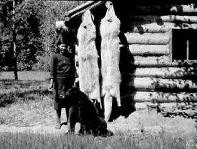 huge-white-wolf