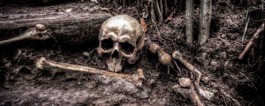 human-skull-in-grass